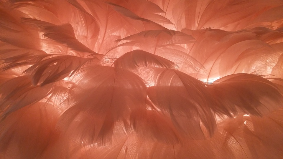 feather-1063583_960_720